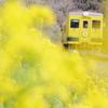 Yellow in yellow