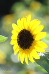 Little summer flowers2