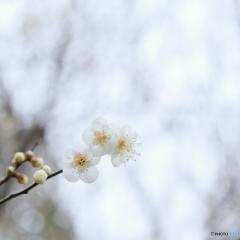 寒空に咲く