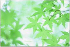 新緑模様Ⅱ