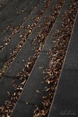 晩秋の階段