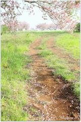牧場の春Ⅲ
