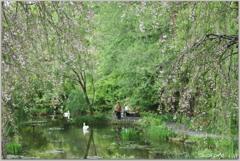 枝垂れ桜と池