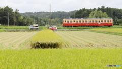 コンバインと軽トラと小湊鉄道