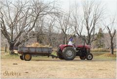 牧場のトラクターⅣ