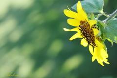 Little summer flower