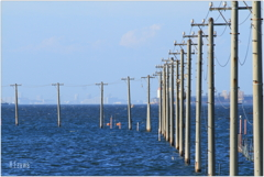 青い海と電柱