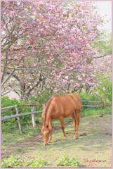 八重桜と馬