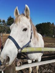 牧場の白い馬~スマホバージョン~