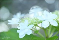 June flowers9