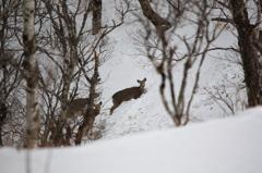 雪中に生きる