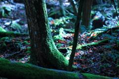 樹海の秋-蒼く深く-