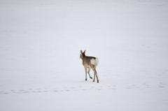 氷上を走る