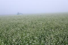 霧のソバ畑