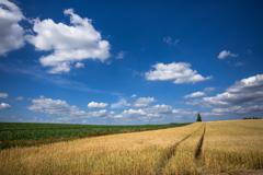 麦薫る季節