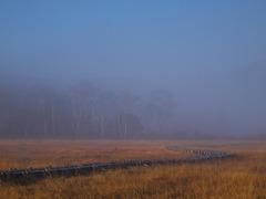 朝霧の尾瀬ヶ原ー白樺が見え始めた