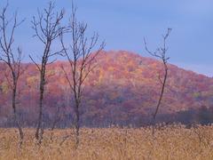 晩秋の尾瀬ヶ原ー枯れ木