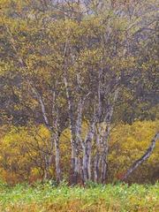 晩秋の尾瀬ヶ原ー黄葉2