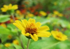 シベの中に咲く花