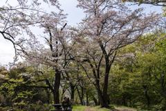 桜の季節、終わり