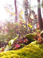 苔と紅葉(緑と赤)