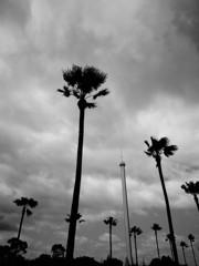 ある日の暗雲、もしくは風