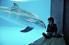 イルカさん、こんにちは