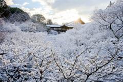雪景色の東福寺 通天橋
