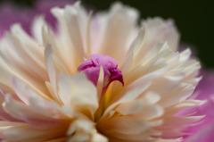 花の中心18