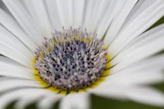 花の中心19