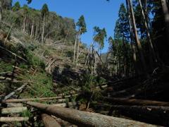 大文字山台風の傷跡
