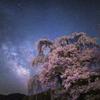天の川に桜咲く