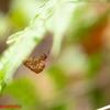 セミの羽化殻