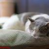 眠るネコ吉