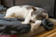 マッタリと眠るネコ吉