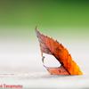 秋っぽいのを撮ってみた・・・