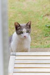 庭にやってきたネコちゃん