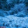雪が残った河原