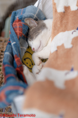 朝のネコ吉