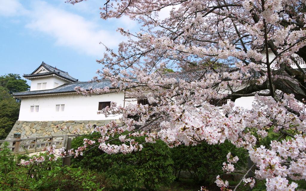 天秤櫓と桜
