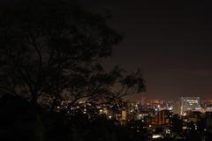 夜を見つづけた木