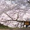 110505弘前さくらまつり (21)