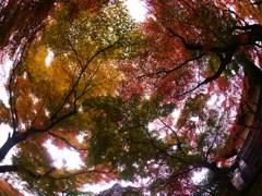 女心と秋の空…