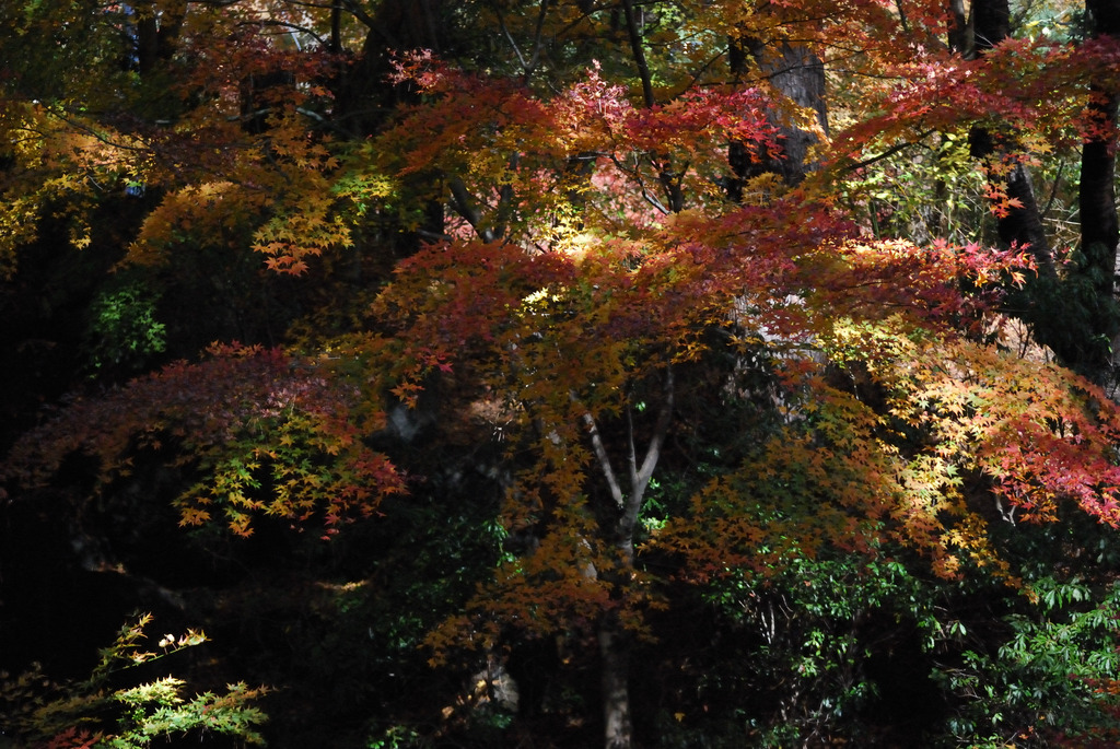 木漏れ日と紅葉