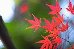 北鎌倉 (円覚寺)