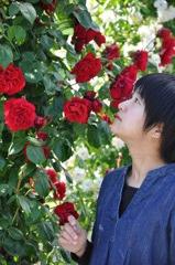 薔薇の誘惑