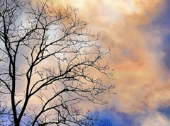 嬉しそうな細い枝