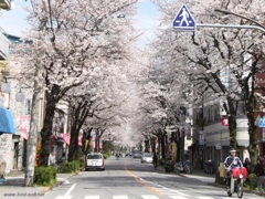 商店街の桜並木2
