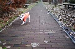 初冬の散歩道