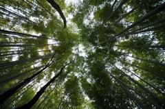 竹林の道 #3